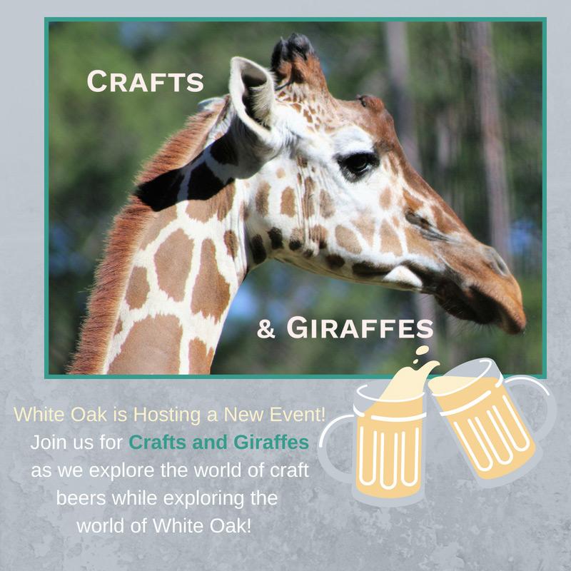 Giraffes and Crafts
